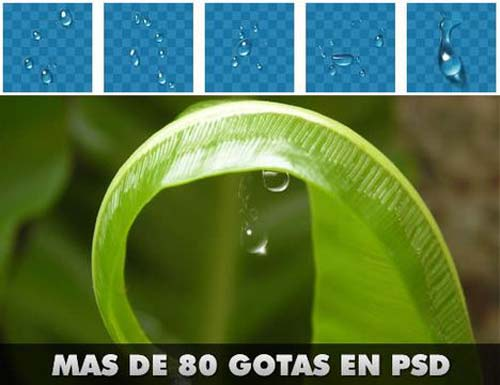 51 Archivos PSD