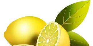 limon en psd