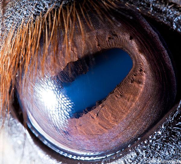 Fotos Macro ojos de animales