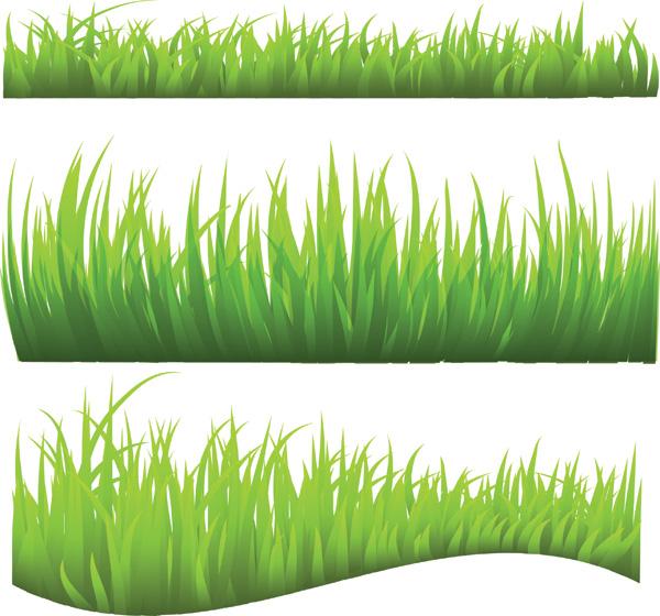 Aporte 6 tipos de pasto cesped vectorizados gs zone - Tipos de cesped ...