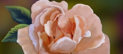 crear-rosa