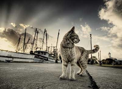hdr-animales-1